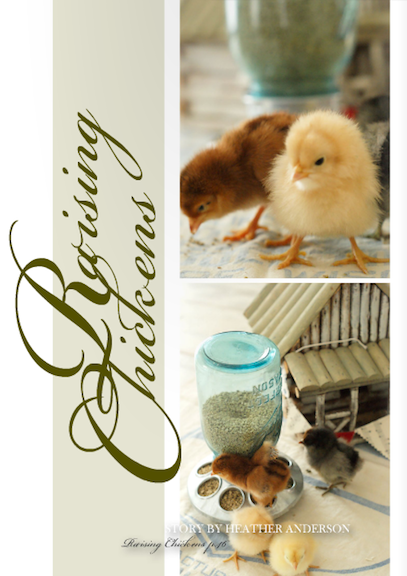 homebound magazine raising chickens